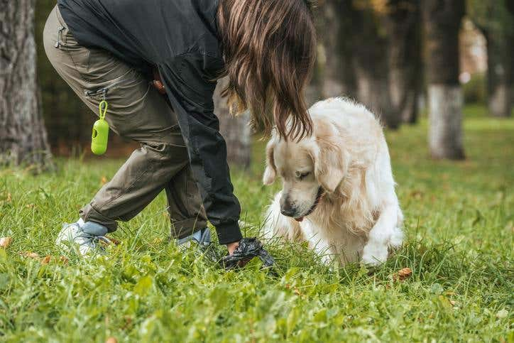 Are You Protecting Your Parks from Pet Waste?