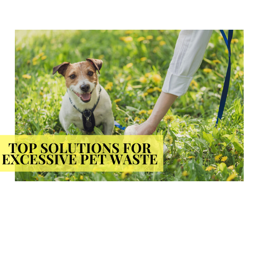 Top Solutions to Excessive Pet Waste