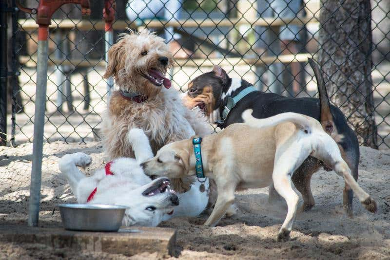 Maintain Your Dog Park in a Few Easy Steps
