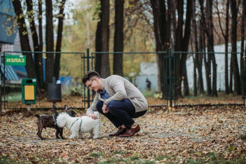Spruce Up Your Dog Park on a Budget